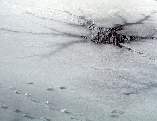 Thin Ice Frost Frozen Pond Ice Winter Season Icy I