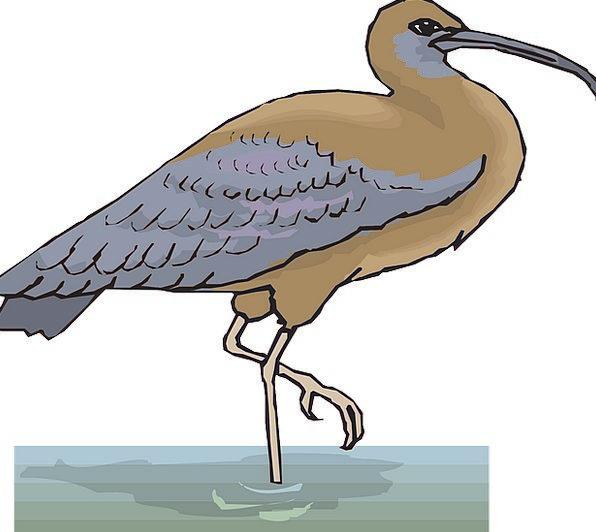 Water Aquatic Fowl Wings Annexes Bird Ibis Free Ve