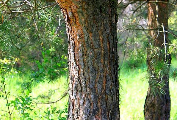 Trunk Stem Landscapes Sapling Nature The Bark Tree