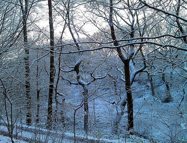 Winter Season Landscapes Woodland Nature Fairytale
