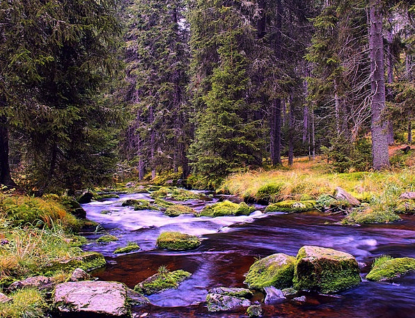 River Stream Landscapes Countryside Nature Trees P