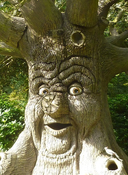 Tree Face Expression Tree Sapling Face Speaking La