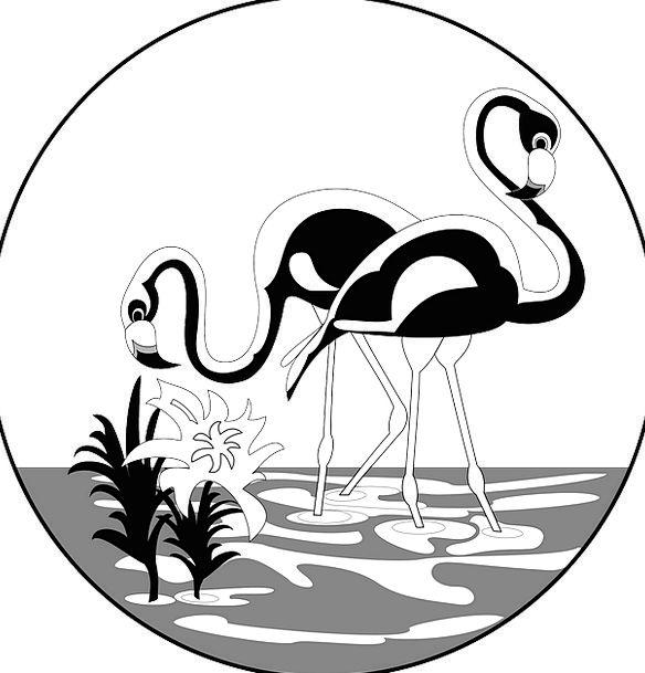 Water Aquatic Long Extended Flamingos Legs Limbs F