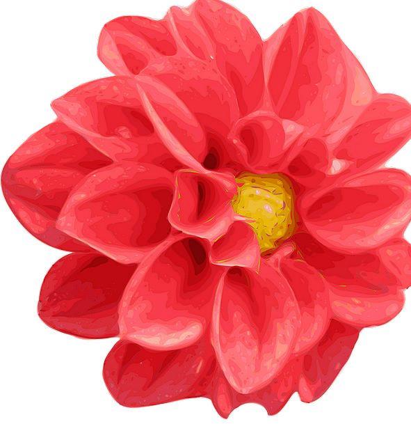 Chrysanthemum Landscapes Nature Red Bloodshot Dahl