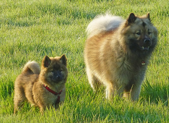 Dogs Canines Friends Networks Eurasians Meadow Fie