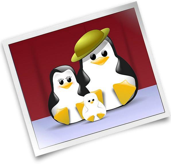 Penguin Penguins Tux Image Copy Free Vector Graphi