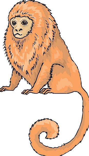 Orange Carroty Sedentary Animal Physical Sitting T