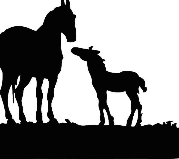 Foal Horse Cattle Silhouette Outline Horses Farm A