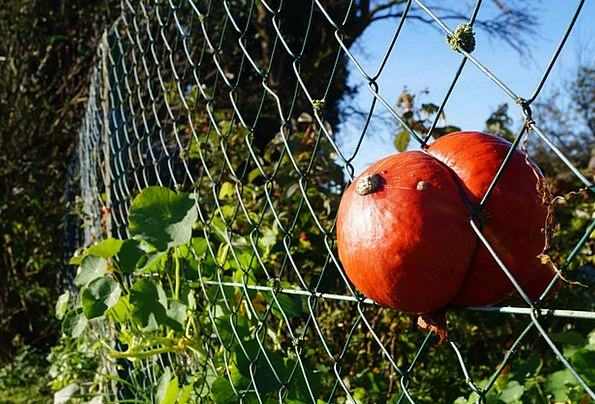 Hokkaido Landscapes Nature Autumn Fall Pumpkin Ing