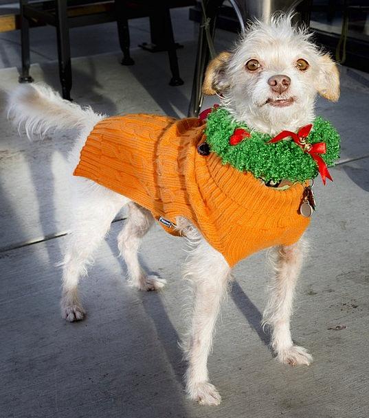 Dog Decoration Beautification Christmas Seasonal C