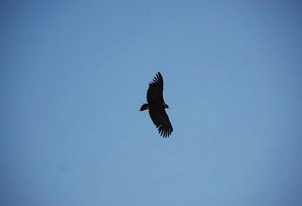 Eagle Blue The Expanse Sky