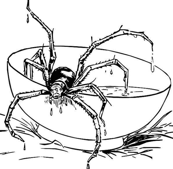 Spider Ball Black And White Bowl Eight Free Vector