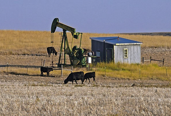 Montana Landscapes Nature Cows Intimidates Oil Pum