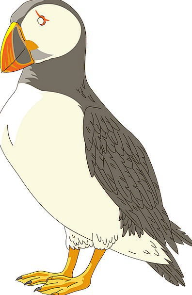 Puffin Bird Fowl Horned Wings Annexes Sad Beak Fre