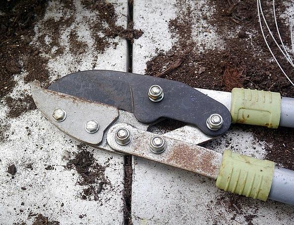Secateurs Shears Instrument Gardening Horticultura
