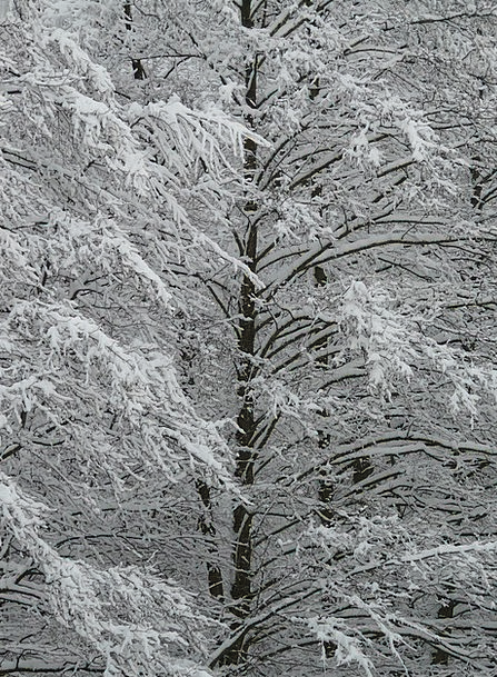Log Record Snow-white Winter Season Snowy Snow Sno