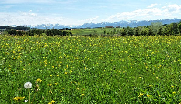Spring Coil Landscapes Nature Meadow Field Allgäu