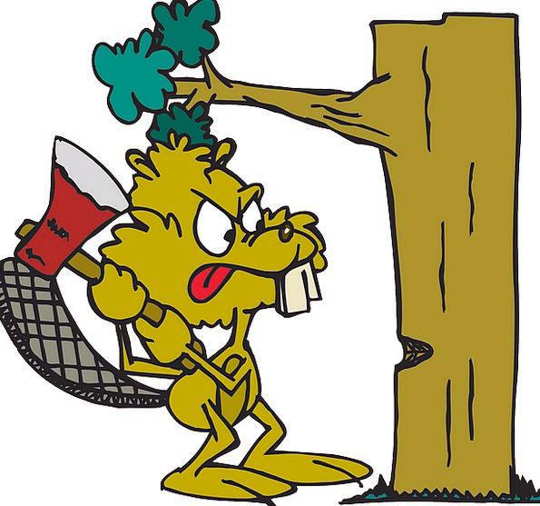 Beaver Work Annoyed Tree Sapling Angry Down Depres