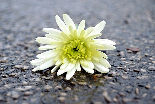 Flower Floret Textures Instruction Backgrounds Bac