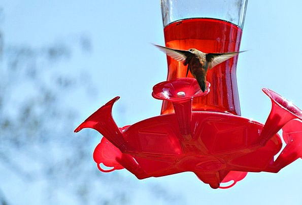 Hummingbird Fowl Feeder Bird Feeding Station Avian
