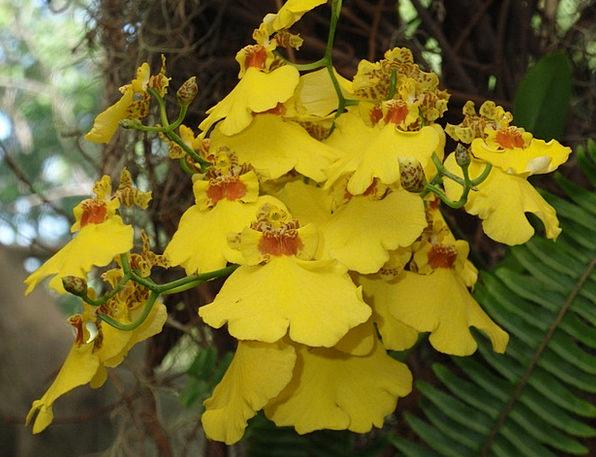 Orchid Landscapes Plants Nature Yellow Creamy Flow