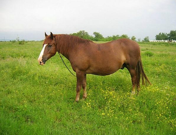 Horse Mount Physical Stallion Animal Field Arena