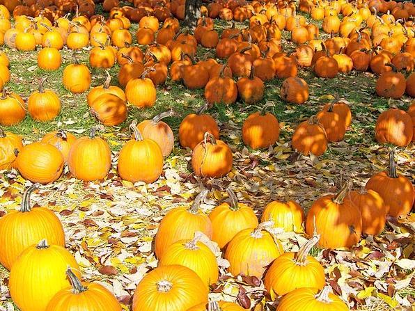 Pumpkins Textures Backgrounds Fall Reduction Autum
