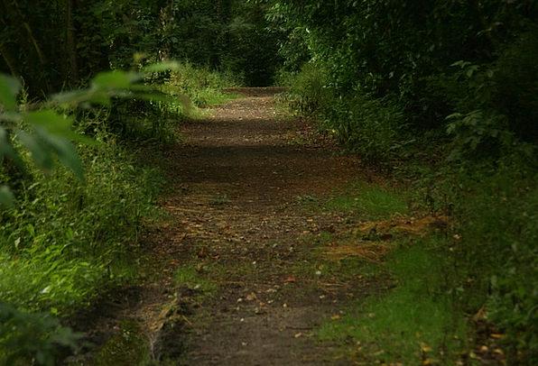 Path Trail Landscapes Plants Nature Landscape Scen