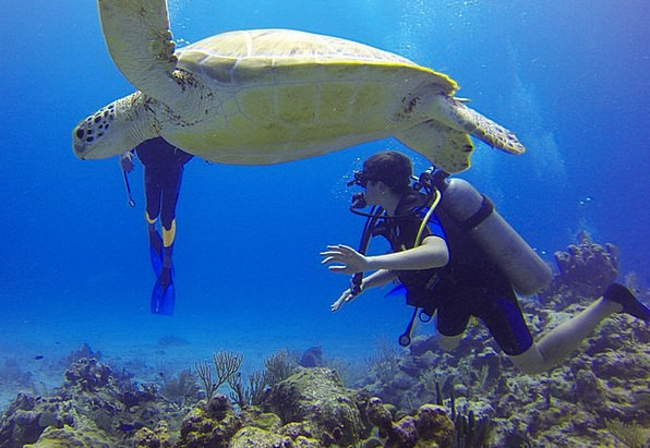 Diving Headfirst Mexico Turtle Scuba Diving Sea Bo