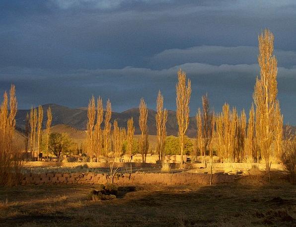 Andean Landscape Landscapes Nature Tree Sapling Ar