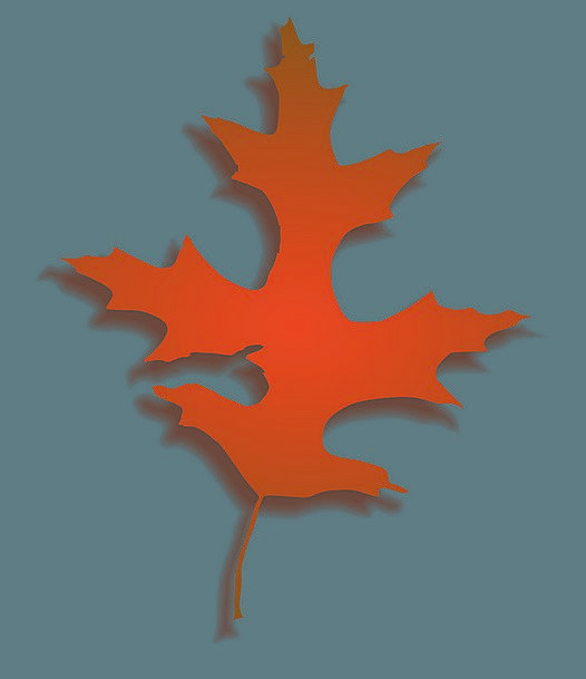 Oak Leaf Greeneries Autumn Leaves Leaves Red Oak L