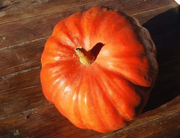 Pumpkin Drink Food Fruit Ovary Sun Light Bright