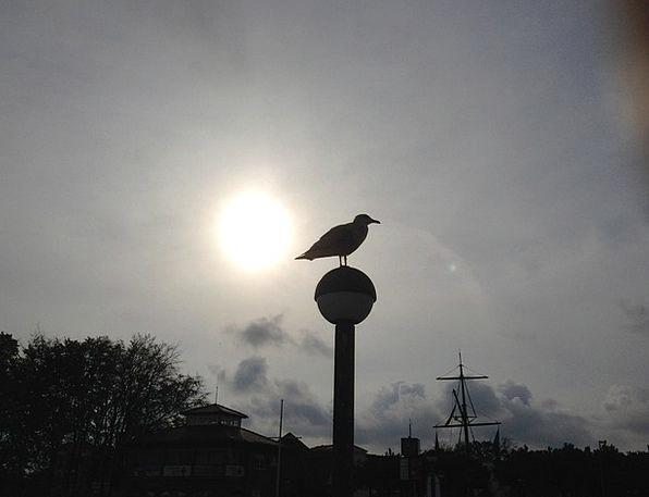 Seagull Taillight Baltic Sea Back Light Coast Shor