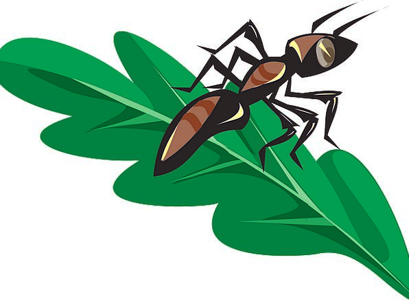 Ant Leaf Foliage Insect Green Lime Free Vector Gra