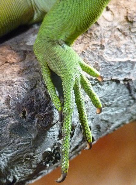 Reptile Base Claw Talon Foot Ten Scale Gauge
