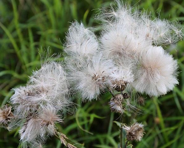 Weeds Wildflowers Kernel Roads Infrastructures See