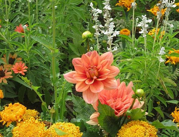 Flowers Plants Bed Divan Blütenmeer Color Discount