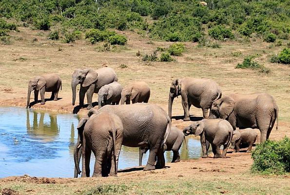Elephant Monster Wilderness Wasteland African Bush