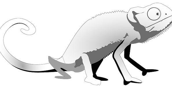 Lizard Leaden Gecko Gray Animal Physical Fauna Wil