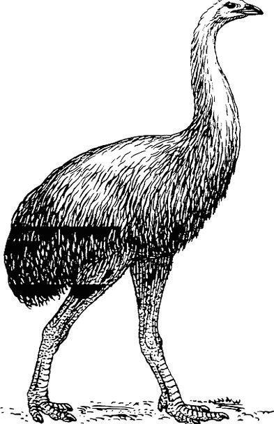Bird Fowl Nonexistent Zoology Extinct Ornithology