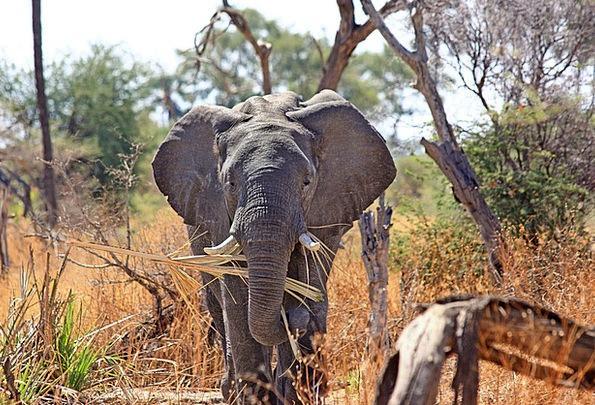 Elephant Monster Physical Proboscis Nose Animal Bi