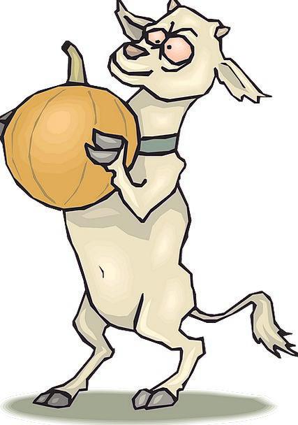Pumpkin Foolish Goat Crazy Standing Stand-up Anima