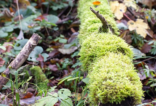 Moss Landscapes Nature Log Record Morsch Withers W