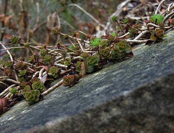 Plant Vegetable Landscapes Pebble Nature Oblique S