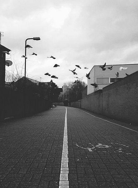 Birds Natures Traffic Transportation Urban Street