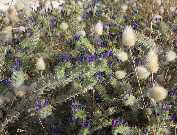 Ground Vegetation Landscapes Vegetation Nature Gra