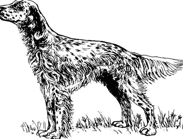 Dog Canine Pet Domesticated English Animal Physica
