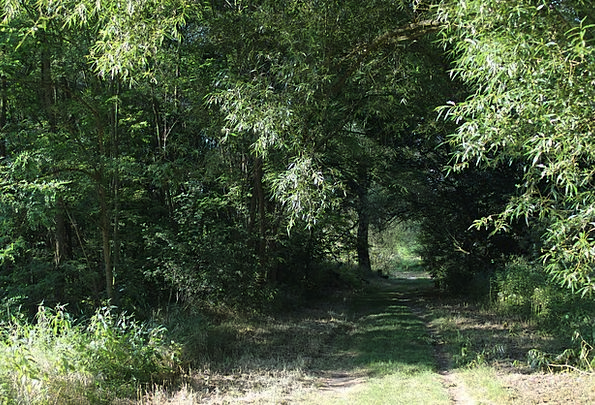 Forest Path Landscapes Countryside Nature Green Li