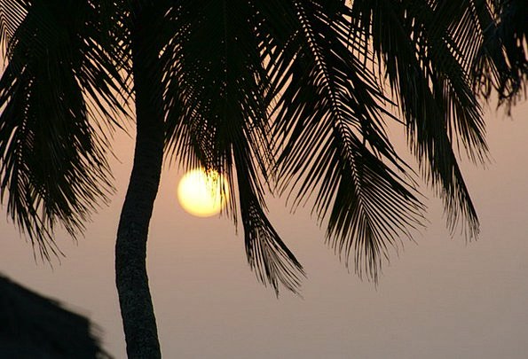 Sunset Sundown Vacation Tribute Travel Guinea Palm