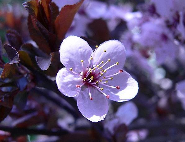 Flower Floret Spring Coil Blossom Botanical Floral